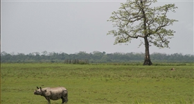 Vida nas Grandes Zonas Húmidas